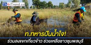 ทหารสุรินทร์ร่วมลงแขกเกี่ยวข้าวชาวบ้าน อ.ชุมพลบุรี ที่ถูกน้ำท่วม